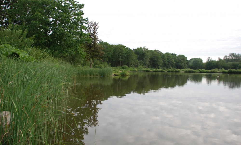 Bungalow Lake